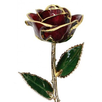 Single Burgundy Colored Gold Rose