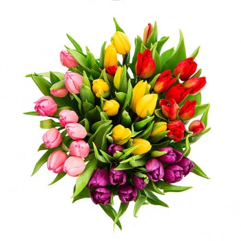 Mixed Tulips Selection